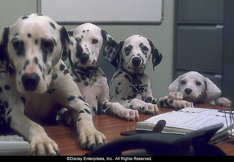 The puppies of 102 Dalmations were a joy to work with. Source: IMDB